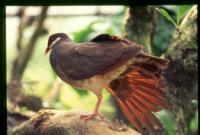 Cet oiseau est: