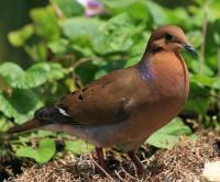 Les petits de cet oiseau sont: