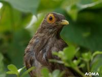 Cet oiseau est protégé?: